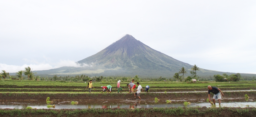 Rice planting season in 2013. Farmers plant rice near the Mayon Volcano in Camalig town, Albay province. Photo courtesy: Nino Jesus Orbeta of the Philippine Daily Inquirer.