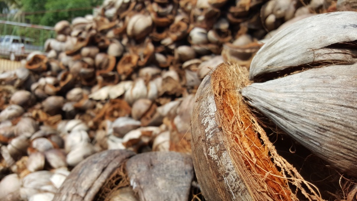 Raw material for coco nets: coco husks