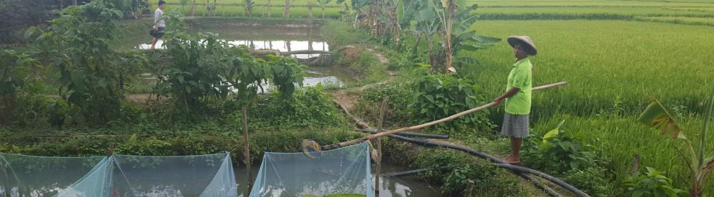 Who Runs the Farm? Girls! Written by Hon Sophia Balod for SubSelfie.com.