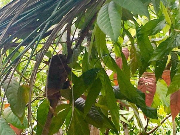 tarsier-Jervis-Manahan-SubSelfie-Blog