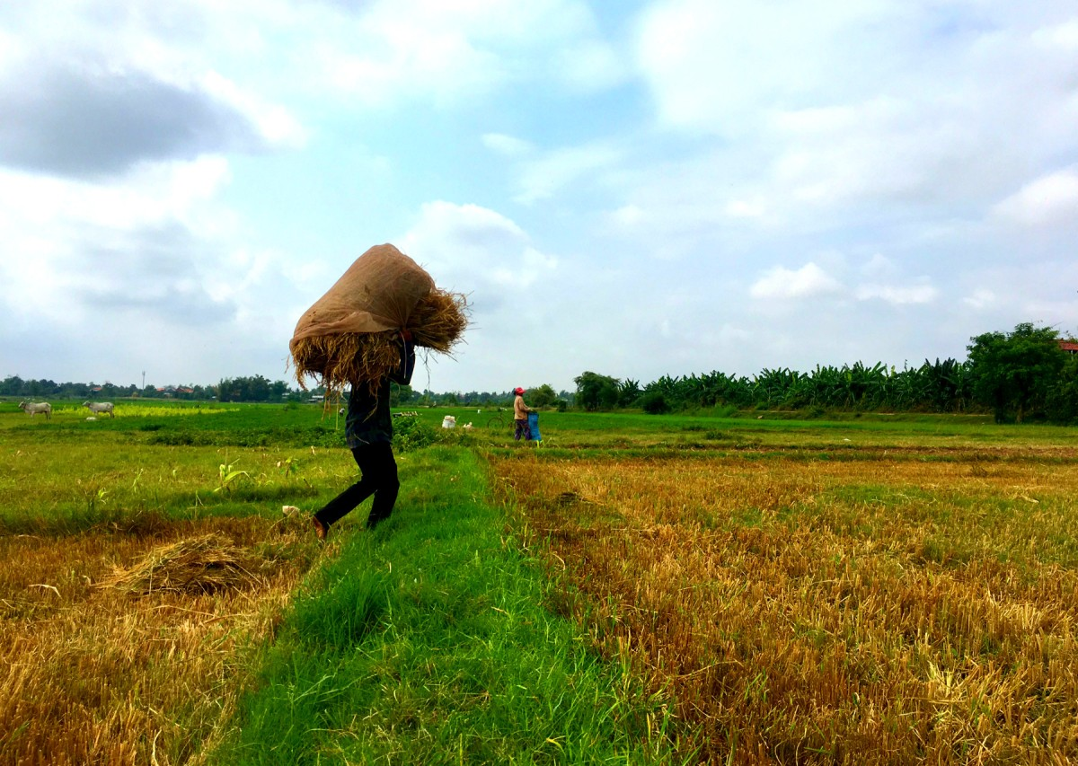 The Disappearing Farmers of Cambodia